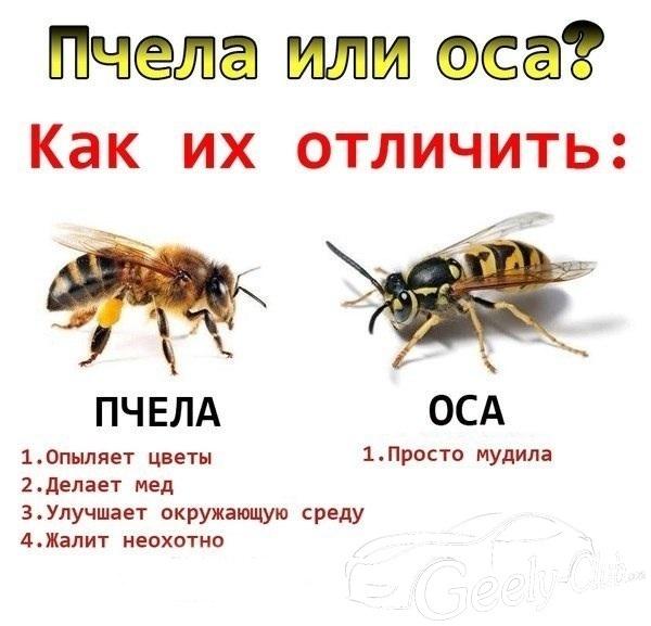 ос.jpg