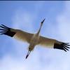 Geely Emgrand EC8 объявлен... - последнее сообщение от sarrus